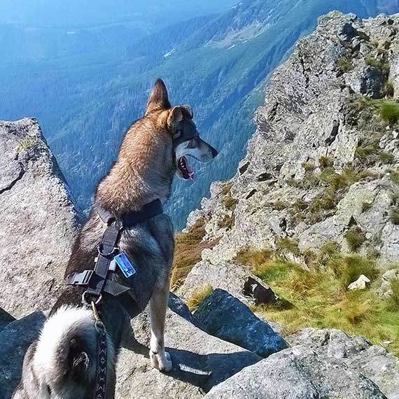 Dog sporting a SafePet ID Tag during a trip to the mountains?>